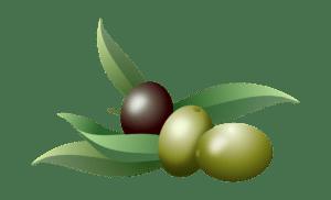 Früchte des Olivenbaums