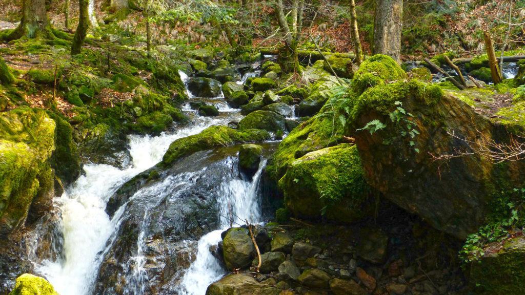 Die wilde Ravenna-Schlucht im Schwarzwald mit Wasserfällen