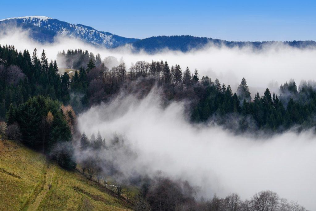 Mystische Stimmung im Schwarzwald