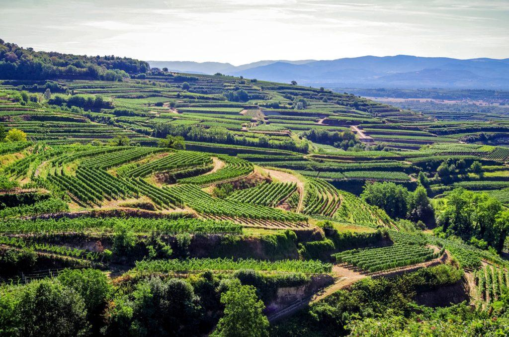 Der Kaiserstuhl, bekannte Weinregion und eines der wärmsten und schönsten Urlaubszielen Deutschlands